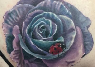 ladyflower